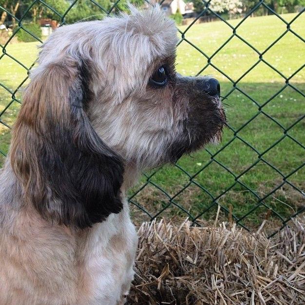 Alfie Dog Name